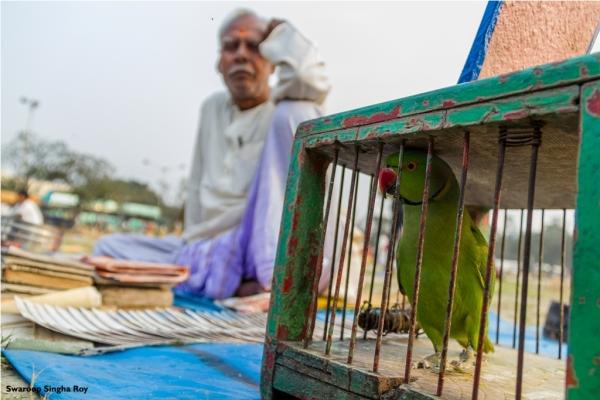 Parrot Astrology
