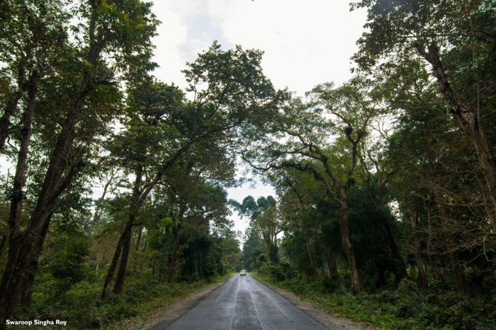 Chilapata Road Forest Jaldapara National Park