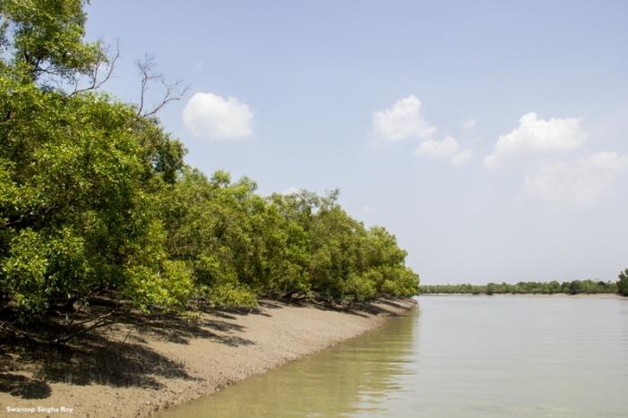 Mangrove River Sunderban Tiger Reserve Swaroop Singha Roy