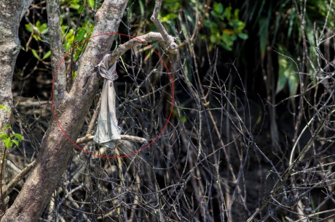 When someone dies in a Tiger attack, a piece of cloth from the victim's body or a one that belongs to him/her is tied to a tree located at or near the spot of the accident. This is done so that when other fishermen are in that area, they'll be aware that an accident had happened previously in that spot.
