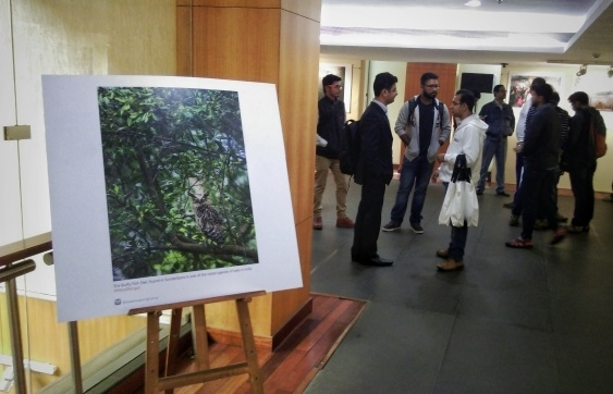 "Photograph of ""Buffy Fish Owl"" exhibited at Instagram's first official photography exhibition in India, at ICCR Kolkata"