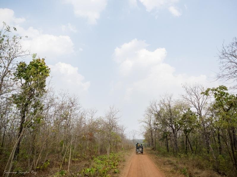 The Forest road, at Umred Karhandla Wildlife Sanctuary